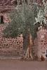 St catherine OldTrees_008