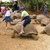 The brave children can ride on tortoises, although the tortoises are biting<br /> <br /> A bátor gyerekek lovagolnak is rajtuk, pedig harapnak a teknõcök