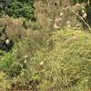 Birds' nests<br /> <br /> Madárfészkek