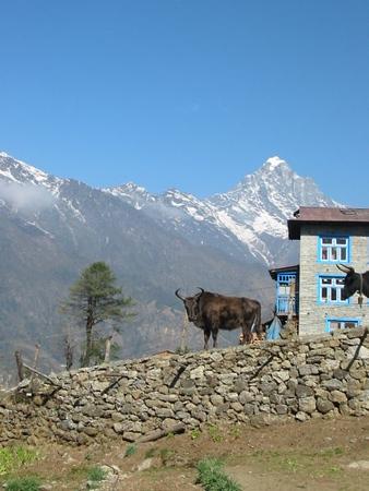 Nepal and Tibet
