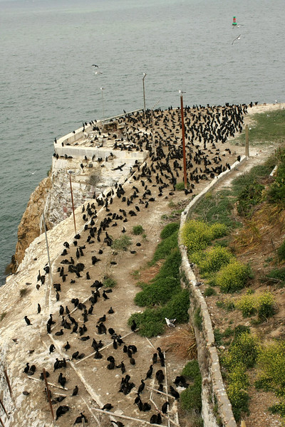 Apparently there are lots of birds on the island right now