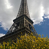 The Eiffel Tower Surrounded by Foliage
