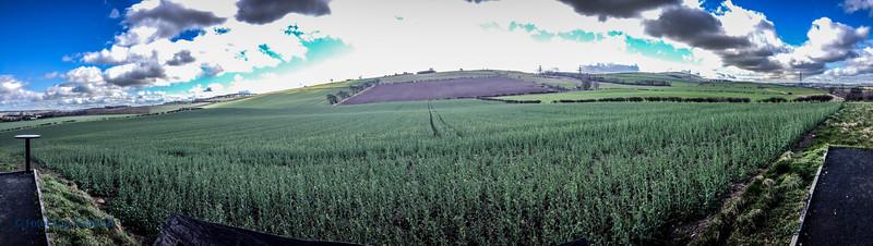 Battle of Flodden Field