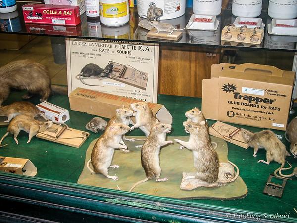 Rats in Paris