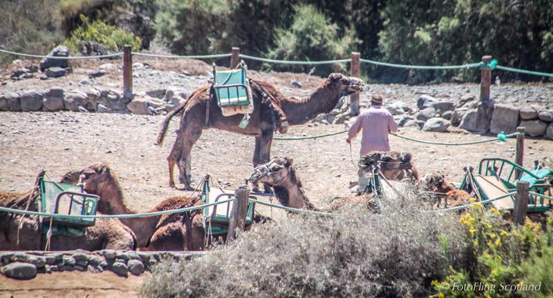 Where did I park my Camel ?
