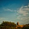 Phoning at Sunset