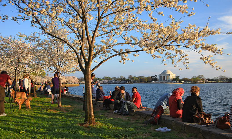Cherry Blossoms, Tidal Basin, People, Picnic, Jefferson Memorial, Washington DC