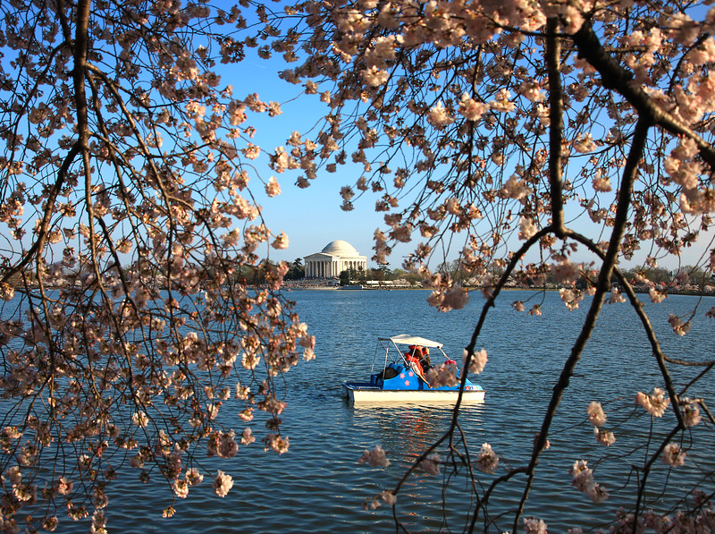 Cherry Blossoms, Tidal Basin, People, Paddle-Boat,Jefferson Memorial, Washington DC