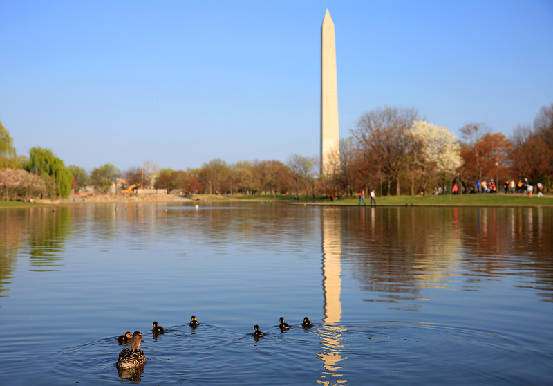 Washington National  Monument, Ducks, Washington DC