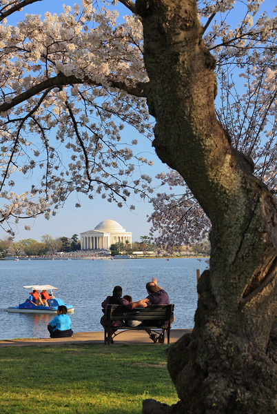 Cherry Blossoms, Tidal Basin,People, Picnic, Paddle boat, Jefferson Memorial, Washington DC