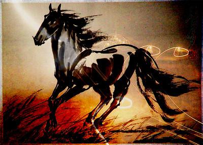 Ahal horses in Ahuotha