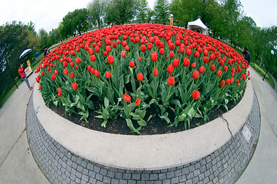 Tulip Festival and Parliament May 2006