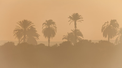 Palmtrees in the mist