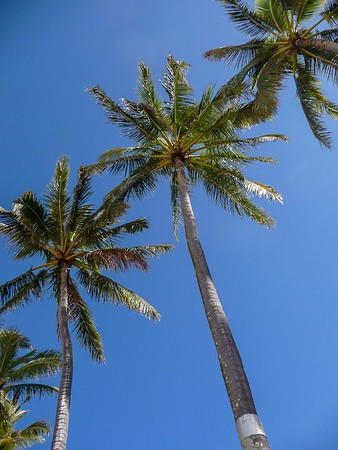 Palm tree view from the ground