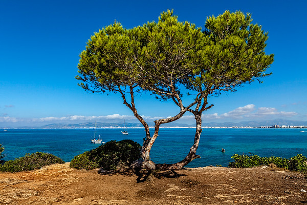 Seascape in Majorca