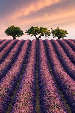Breath of Life || France