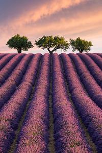Breath of Life    France