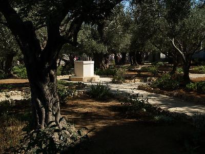 Garden of Getsemane, Jerusalem, Israel