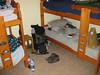 My room in El Calafate