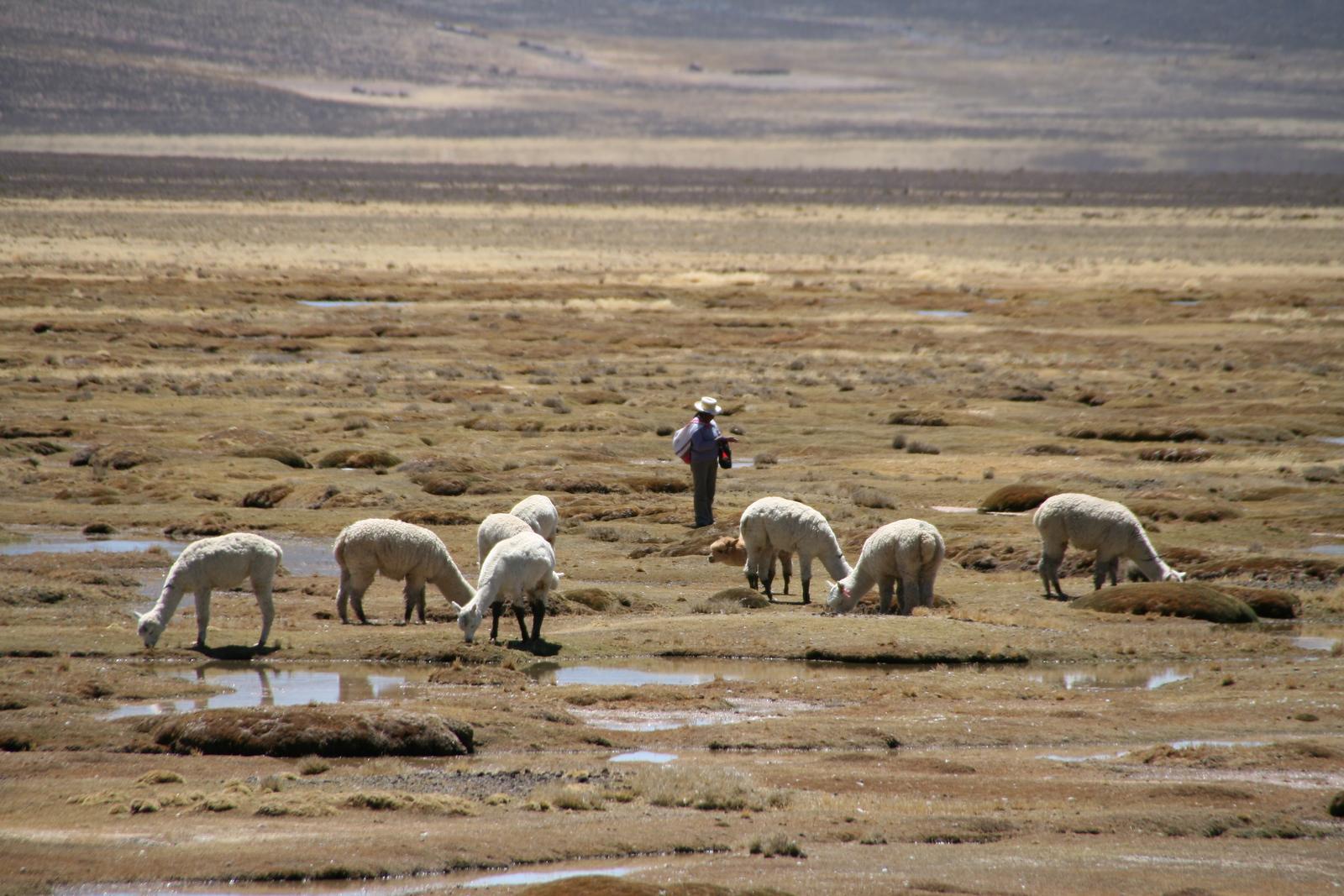 Reserva Nacional Salinas - Aguada Blanca