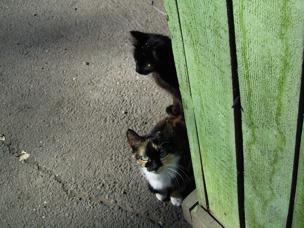 Two shy cats in Irkutsk