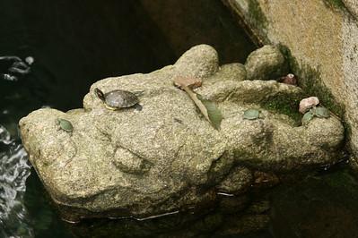Nanjing's micro turtles