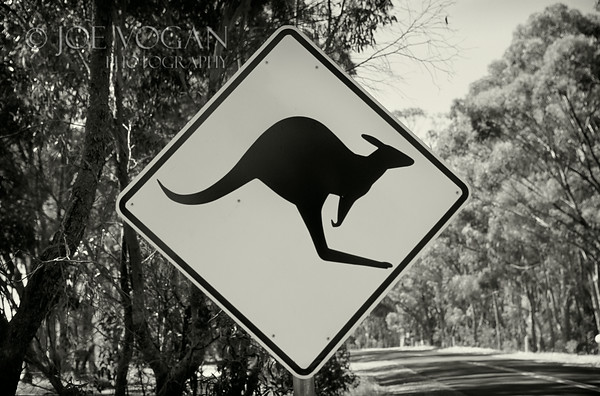 Kangaroo Crossing Sign, Southern Australia