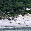 Little Oberon Bay, Wilson's Promontory National Park, Victoria, Australia