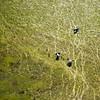 Elephants from above, Okavango Delta, Botswana