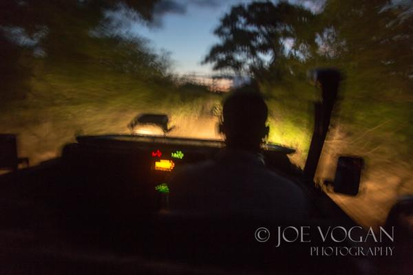 Night Drive, Moremi area, Botswana