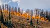 Forest Ablaze!