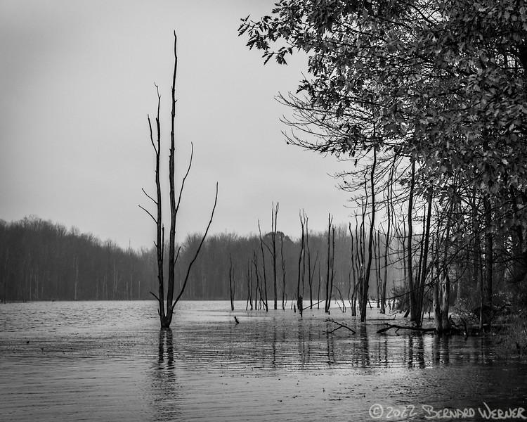 Crane Road Swamp