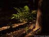 Forest Floor Still Life