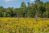 Wetland Color