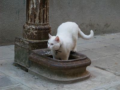 Cat #1, Venice