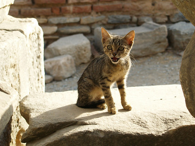 Indignant Kitten, Ephesus, Turkey