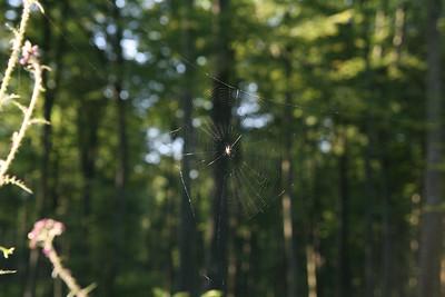 Norman spider