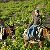 Man and Donkey, Southern Santorini, Greece