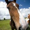 Horse, Western Ireland