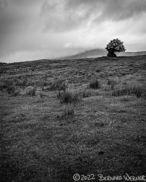 Faerie Tree II