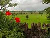 Poppys' View
