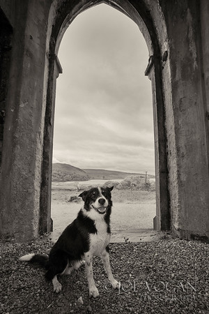 Dog inside Dunlewey Church of Ireland, Donegal County, Ireland