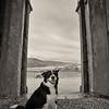Dog inside Dunlewey Church of Ireland, Donegal County, Ireland