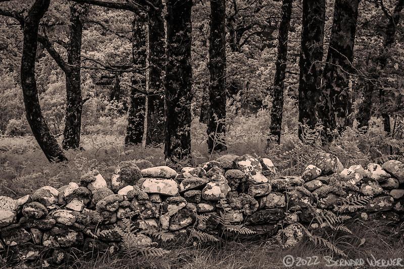 Stone Wall II