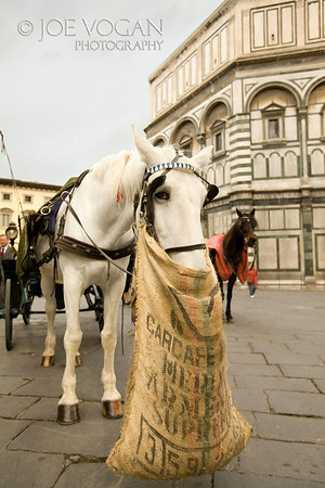 Horse in Piazza del Duomo, Florence, Italy