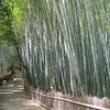 Bamboo Groves at Arashiyama