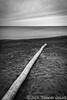 Log on the Beach