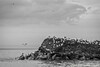 Ice Dune Thaw III