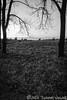 Reflective Grasses