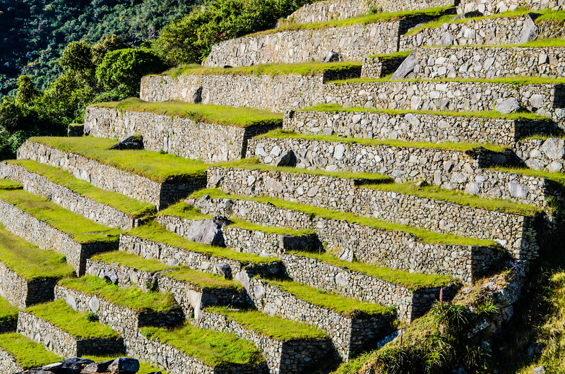 Terraces of Macchu Picchu